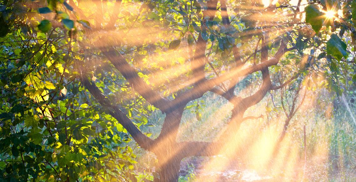 車いすで森林へGO!苫小牧市静川の「苫東・和みの森」