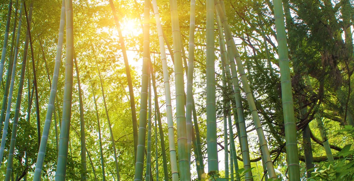 「竹ぼうきプロジェクト」で高齢者と若者をつなぐ。鹿児島県長島町からはじまる挑戦とは。