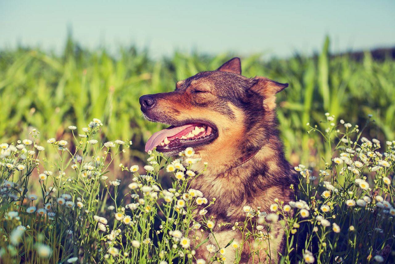 日本に盲導犬が誕生して60年。「アイメイト」たちへの接し方と日々の活躍