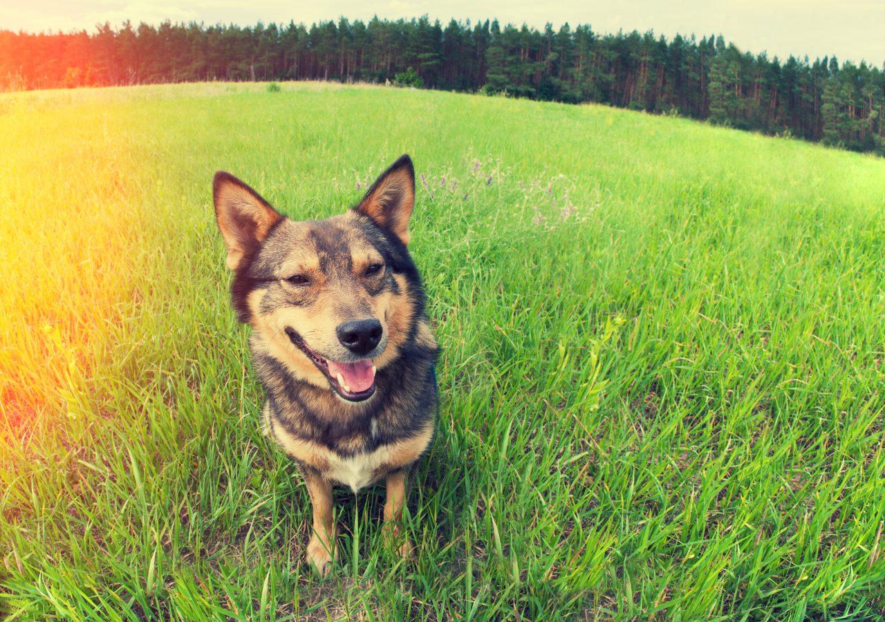 あなたは補助犬を理解していますか?盲導犬・聴導犬・介助犬への理解を!