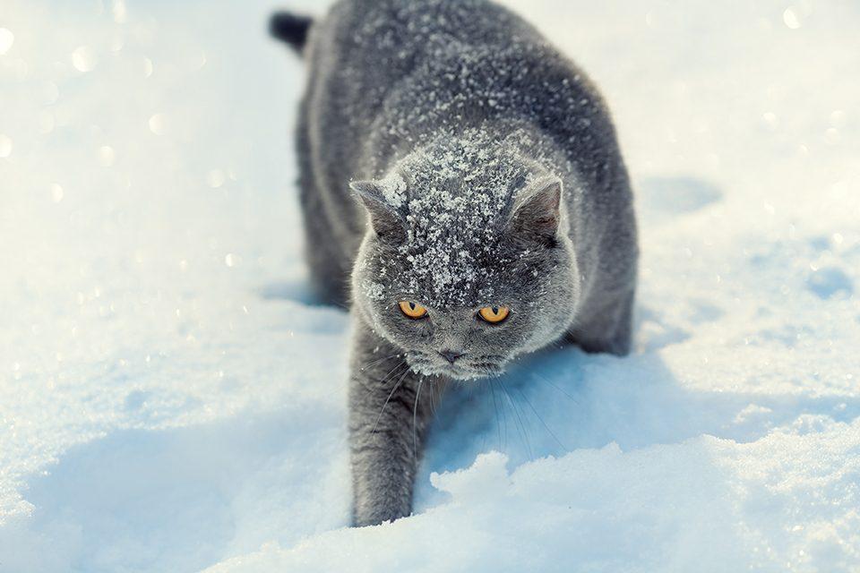 冬に注意!冷えによる「寒冷じんましん」どう対策する?