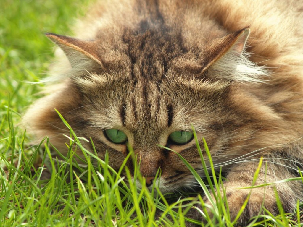 cat-portrait-with-green-eyes-matching-green-background_zjngakv_