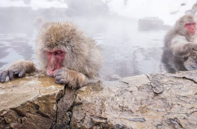jigokudani-snow-monkey-bathing-onsen-hotspring-famous-sightseeing-in-japan_bdcq6lohze