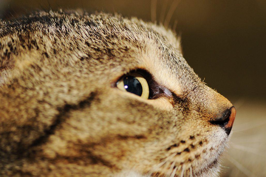 2月22日は猫の日、イベントたくさん