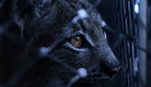 """「猫の日」に考える""""命の格差""""をなくすために出来ること"""