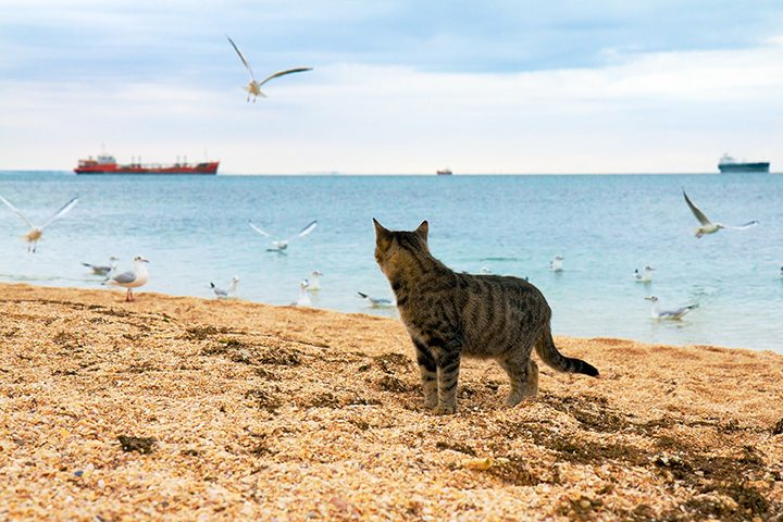 映画『ミリキタニの猫《特別篇》』。年老いた路上画家の絵が激動の時代を語る。