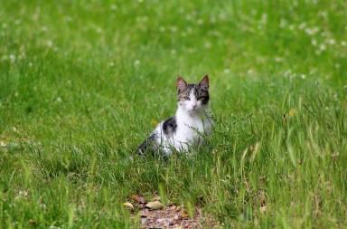 cat-1913986_640