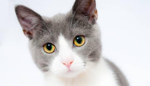 「猫の日」だからこそ 我が家のにゃんこの健康チェック