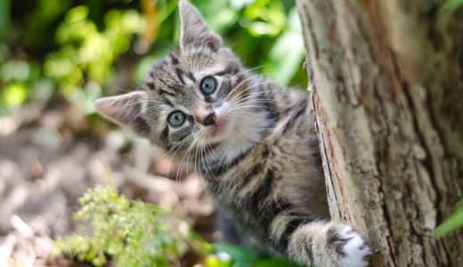 「猫は名前を聞き分けている」上智大が発表 猫も凄いんです!