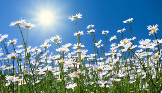 村下孝蔵の命日6月24日に、名曲「花れん」を聴こう