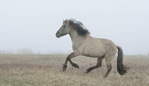「人間万事塞翁が馬」の意味、知ってるつもり?!